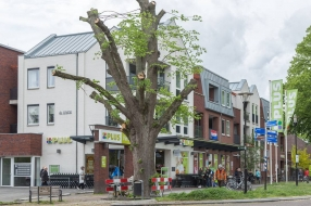 Eeuwenoude linde gekortwiekt nadat zware tak op auto valt in Overloon