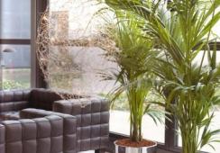 Foto's van The Florist Bloemen en Planten