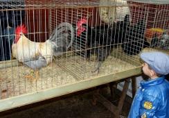 Foto's van Vereniging Pels en Pluim Kleindieren-manifestatie